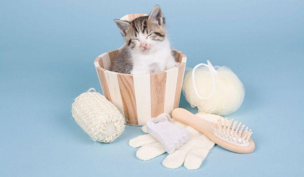 sleeping kitten with bathing supplies